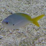 001-aquariumvisje