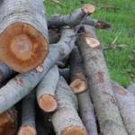 001-thumbnail houtblokken