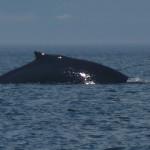 001-walvis