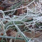 thumbnail spinneweb met rijp