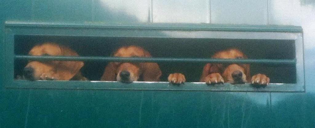 008-Honden