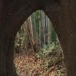 018-Thumbnail aan elkaar gegroeide bomen
